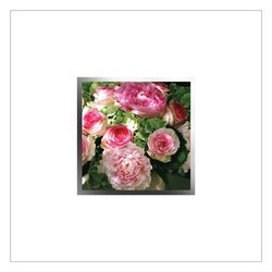 English Accent Greeting Card - EA88W
