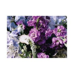 English Accent White Blossom Gift Card with .