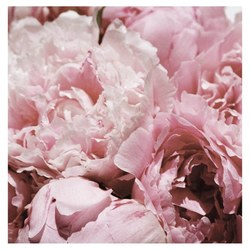 English Accent Peony Gift Wrap