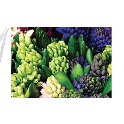 English Accent Hyacinth Gift Card with Ribbon